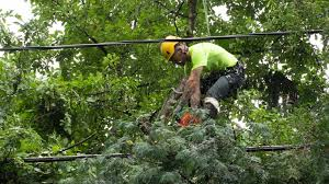 CMP employee trimming a tree (photo from cmpco.com)
